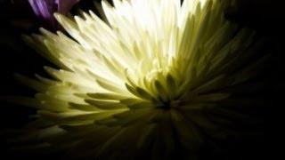карвинг из овощей: цветок хризантема из пекинской капусты