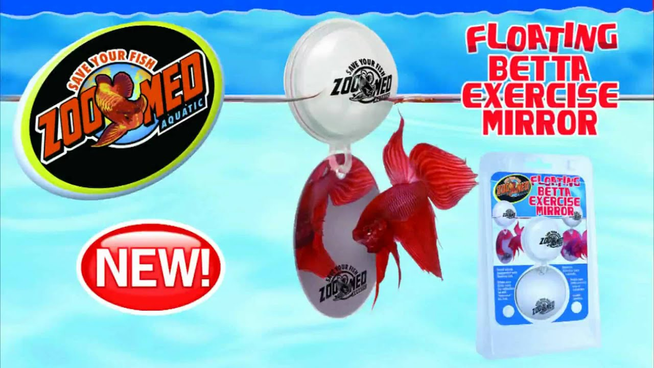 Zoo med floating betta exercise mirror youtube for Betta fish floating