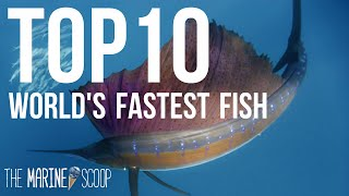 TOP 10 FASTEST FISH IN THE OCEAN