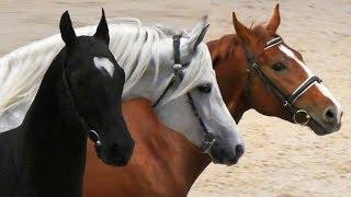 Лошади 17 пород!  ПАРАД ПОРОД #ИППОсфера 2019 конная выставка /Породы лошадей #ПарадПород #Лошади