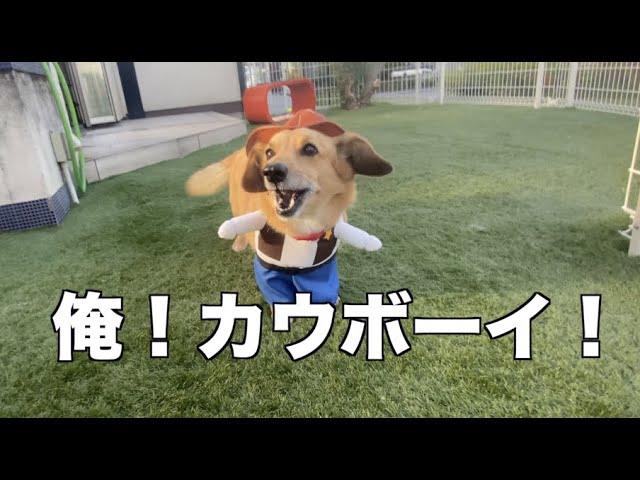 MIX犬 コロ太のオシャレ