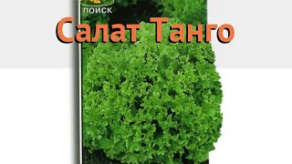 Салат обыкновенный Танго Листовой (tango) 🌿 обзор: как сажать, семена салата Танго Листовой
