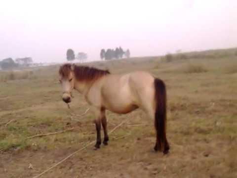 chơi với ngựa