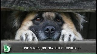 Притулок для тварин у Чернігові | Телеканал Новий Чернігів