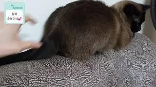 고양이의 쉬는영상 - 춘복이의 꼬리살랑살랑 보며 힐링해…