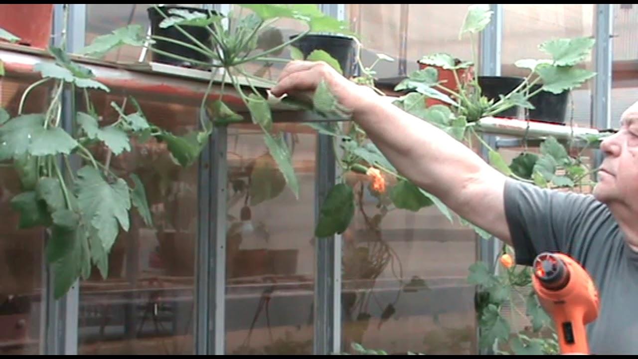 Вредителей садов и огородов уничтожить горячим воздухом.