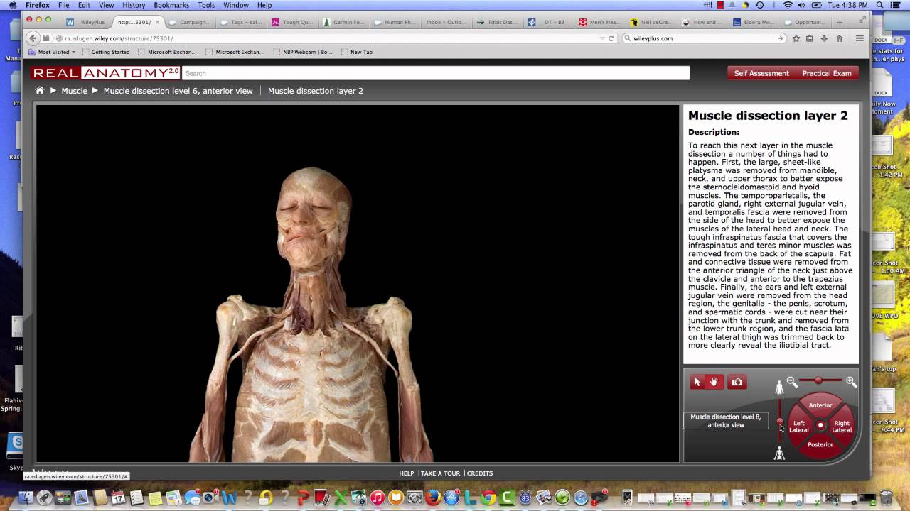 Real Anatomy - YouTube