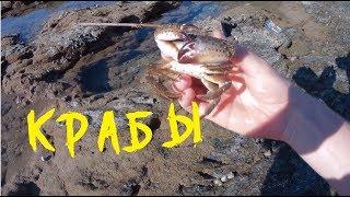Видео Охота на крабов Средиземного моря