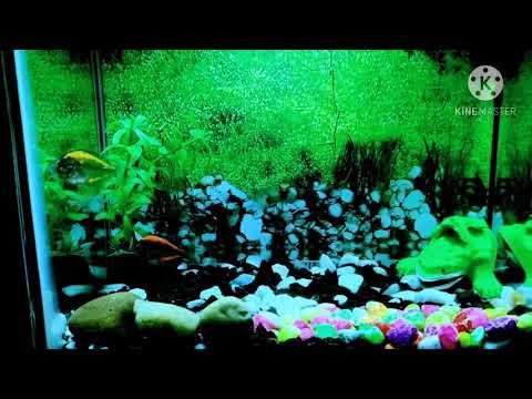 Glass Fish Tank🤙