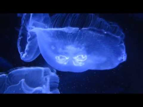 Jellyfish: The Mysterious Creatures Of The Ocean