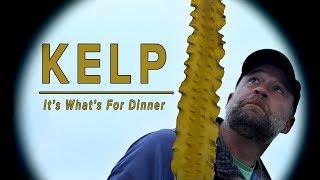 Kelp: It's What's For Dinner