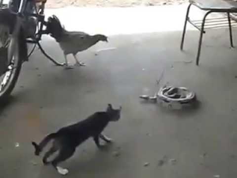 Le Chat Savait Qu'il N'y A Pas De Petit Serpent