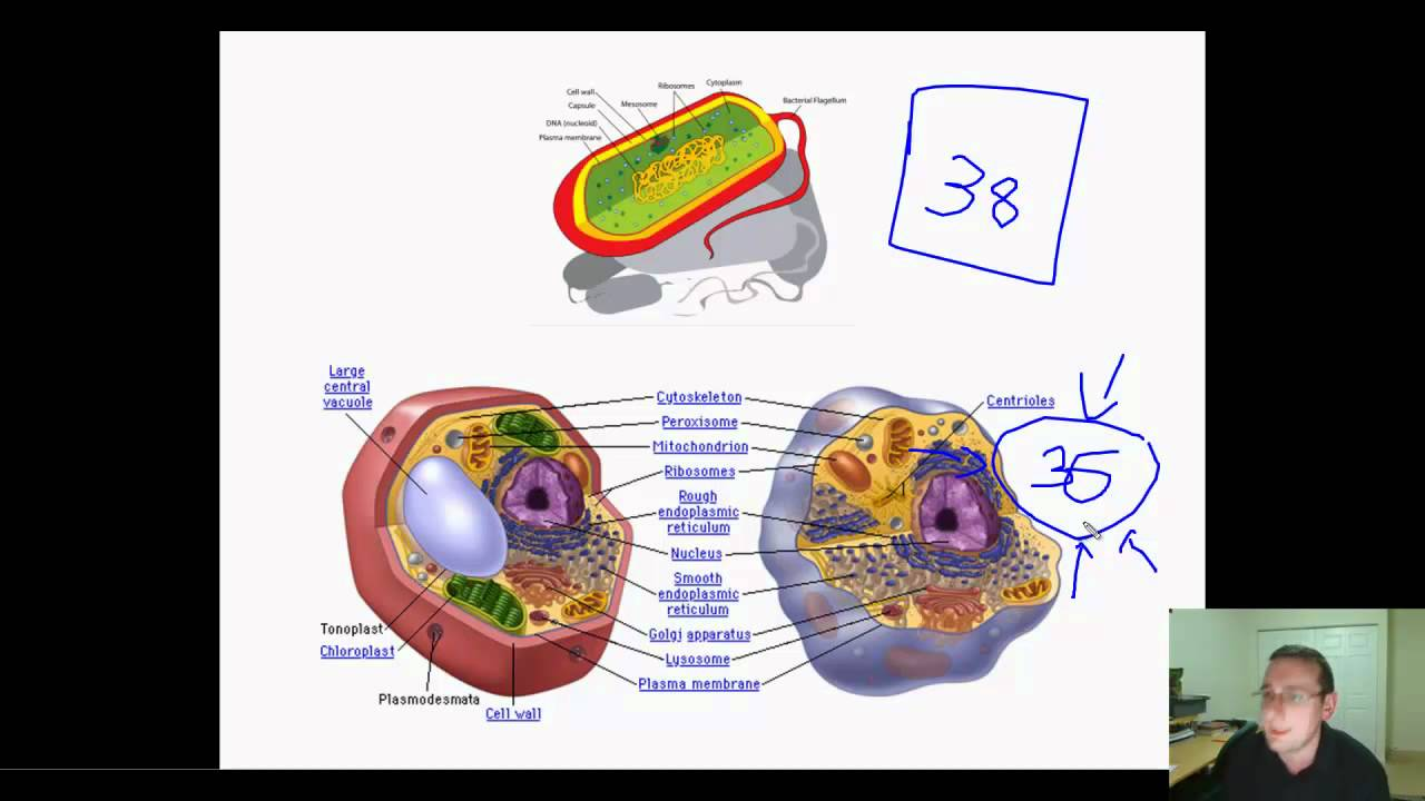 maxresdefault cellular respiration variations vs universality, & evolution youtube