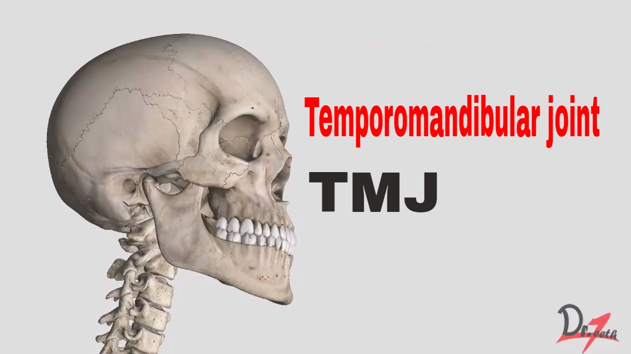 Anatomy Of Tmj Temporomandibular Joint Youtube