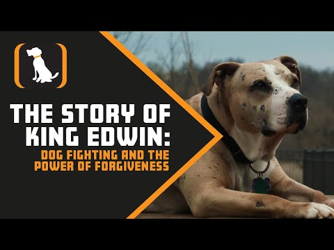 The Story Of King Edwin: Dog Fighting And The Power Of Forgiveness