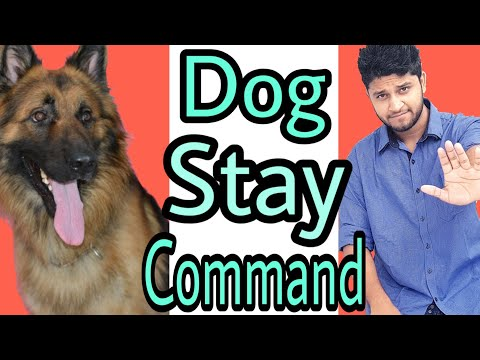 German shepherd information in urdu