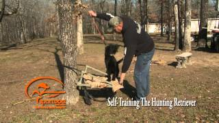 "Vid 3 Teaching The ""place"" Command - Self Training The Hunting Retriever"