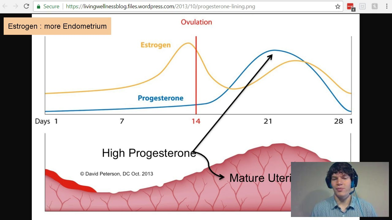 MCAT Question of the Day: Estrogen and Progesterone