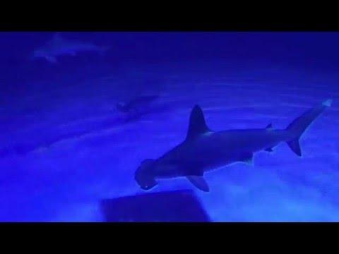 National Museum of Marine Biology & Aquarium - Hey Hai