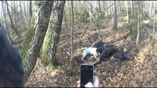 Охота на лося в Брянской области