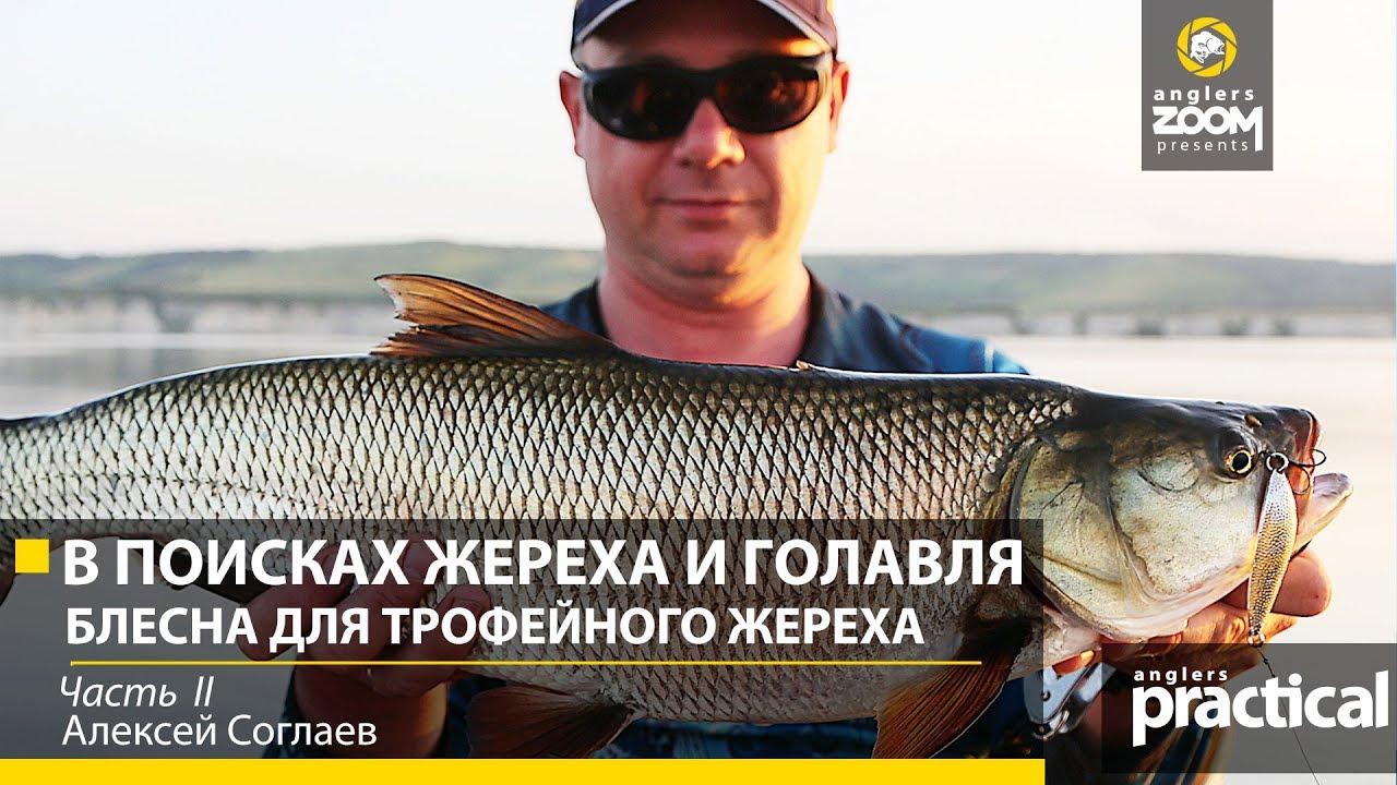 ловля хищной рыбы на спиннинг на дону