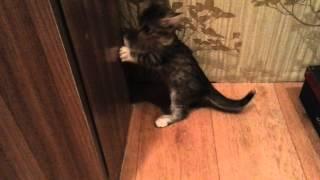 Хозяин чихает на котят...