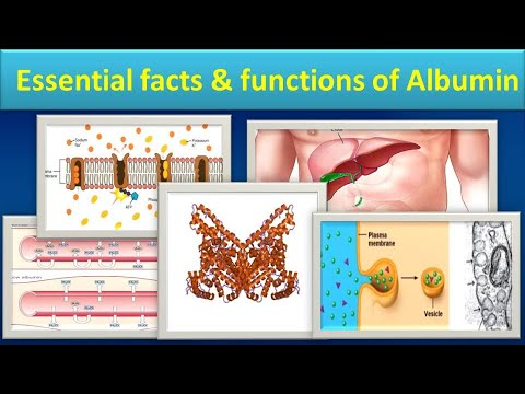 Essential Facts & Functions Of Albumin.(Clear Overview)