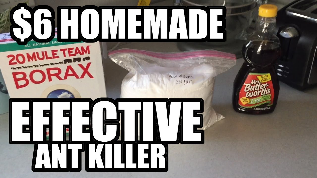 Fast Sugar Ant Killer Recipe Youtube