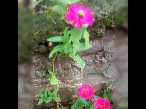 Tanaman bunga dan buah yang cocok dipekarangan