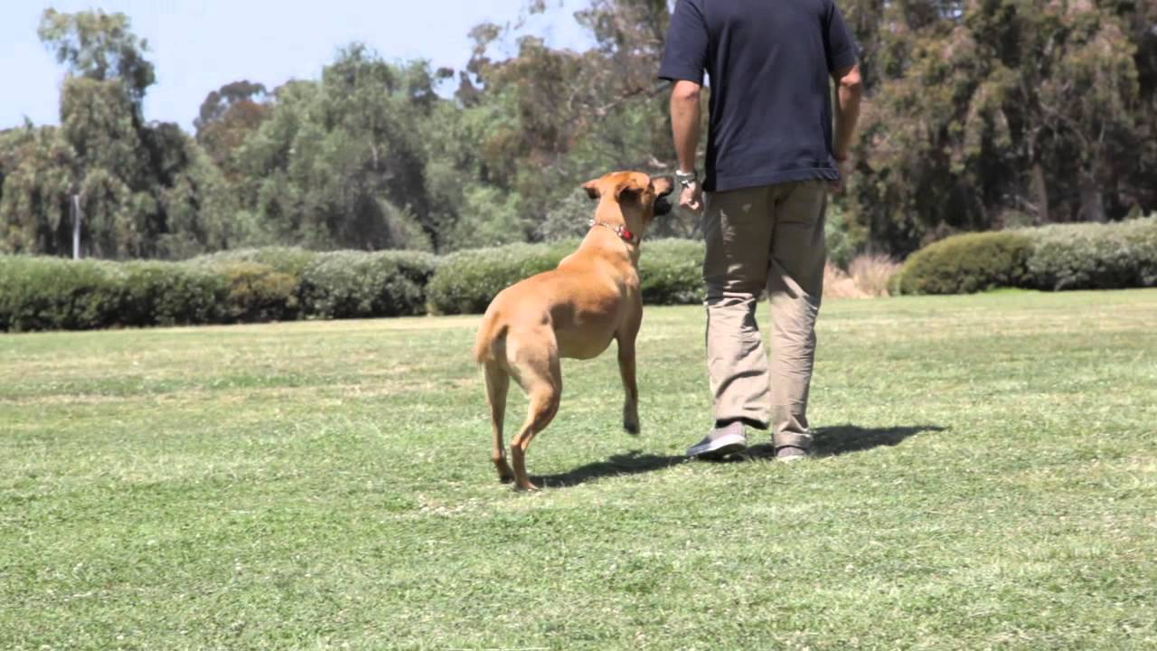 Fun Games to Teach Dogs : Dog Training & Behavior