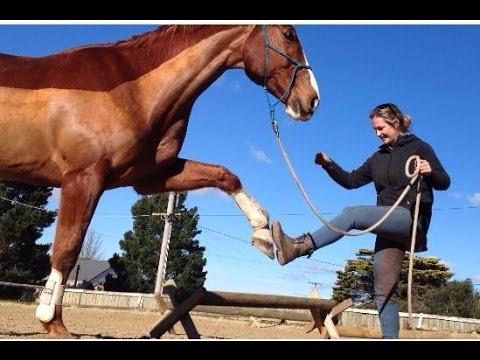 My Million Dollar Horse