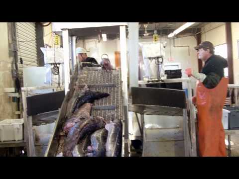 Meet Your Fishermen: Portland, Maine