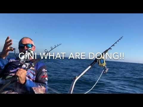 Portland Blue Fin Tuna Fishing Charters Victoria Trolling through Sharks Birds Seals and Tuna
