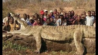 Top 10 Abnormally Biggest Animals You Must See