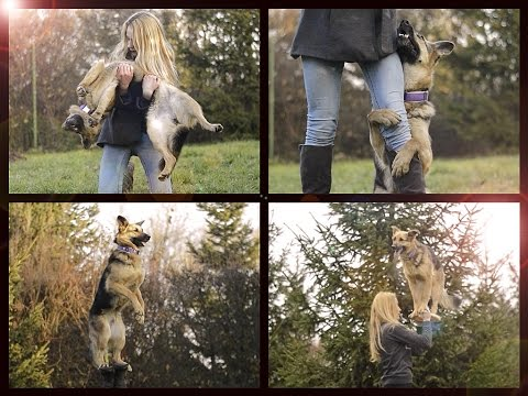 DOGFRISBEE & TRICKS BY GERMAN SHEPHERD BRITNEY ♥