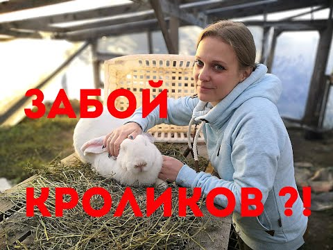Забой кроликов?! Кролики
