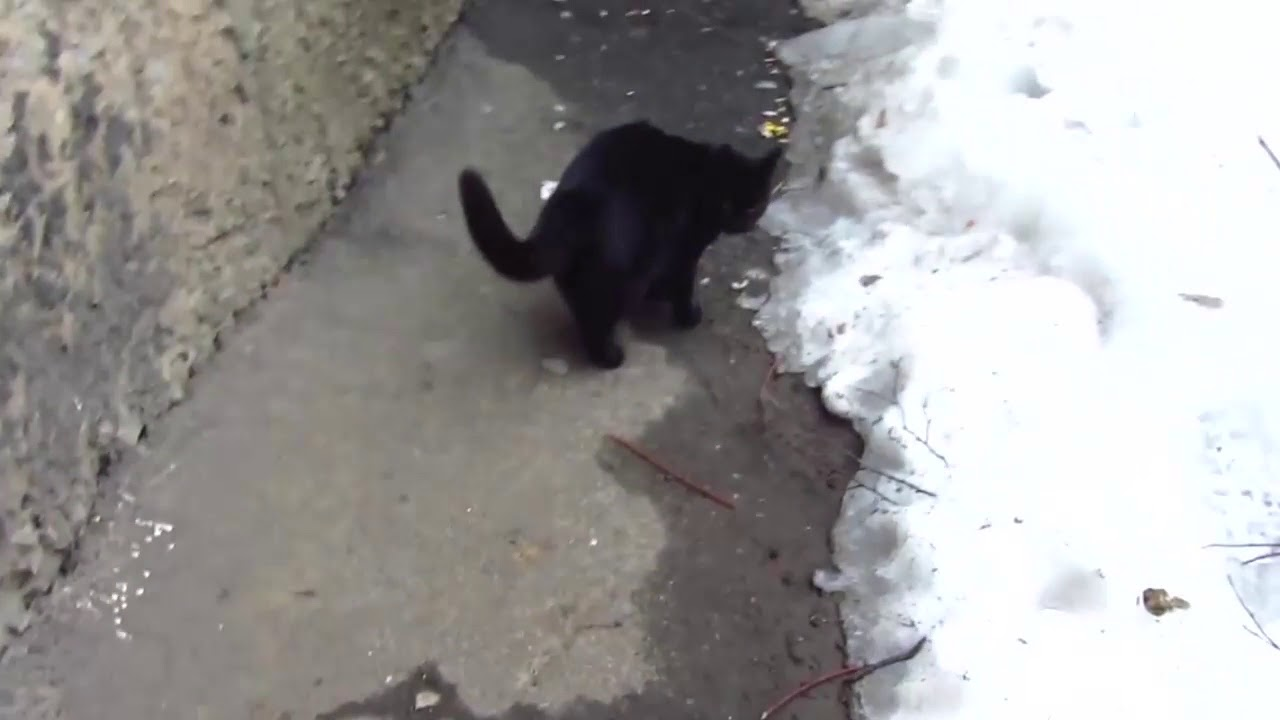 Scared cats jumping from basement12 - YouTube