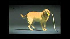 GIC - 01 - Car Insurance - Guardian Dog