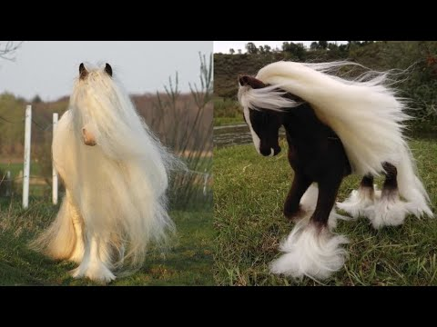 Horse SOO Cute! Cute And funny horse Videos Compilation cute moment #20