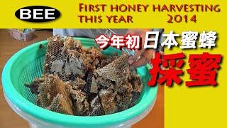 日本蜜蜂の今年最初の採蜜  Honey extraction of this year beginning of a Japanese honeybee
