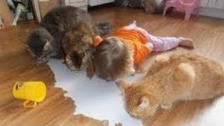 Funny Babies and Cats Videos compilation. Baby and Cat Fun and Fails