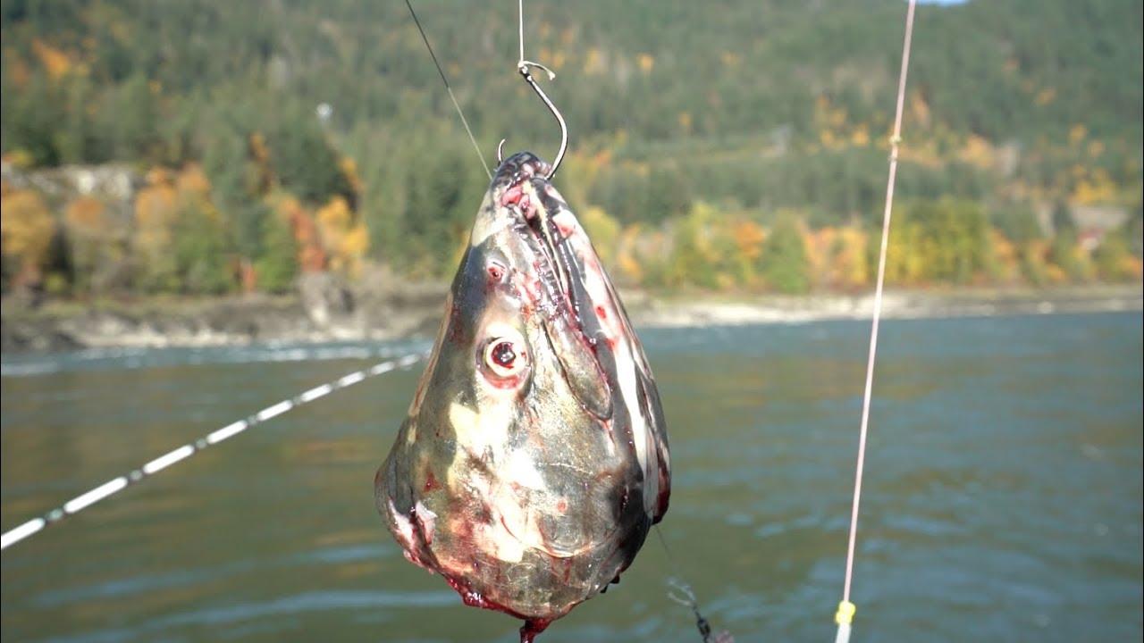 Biggest Fish North America