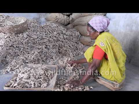 All Spices Market And Ginger Sorting Yard In Kochi