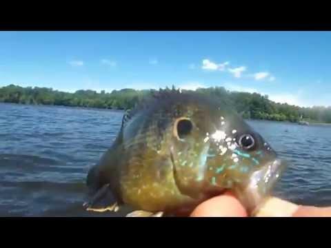 Burke Lake Fairfax VA Fishing