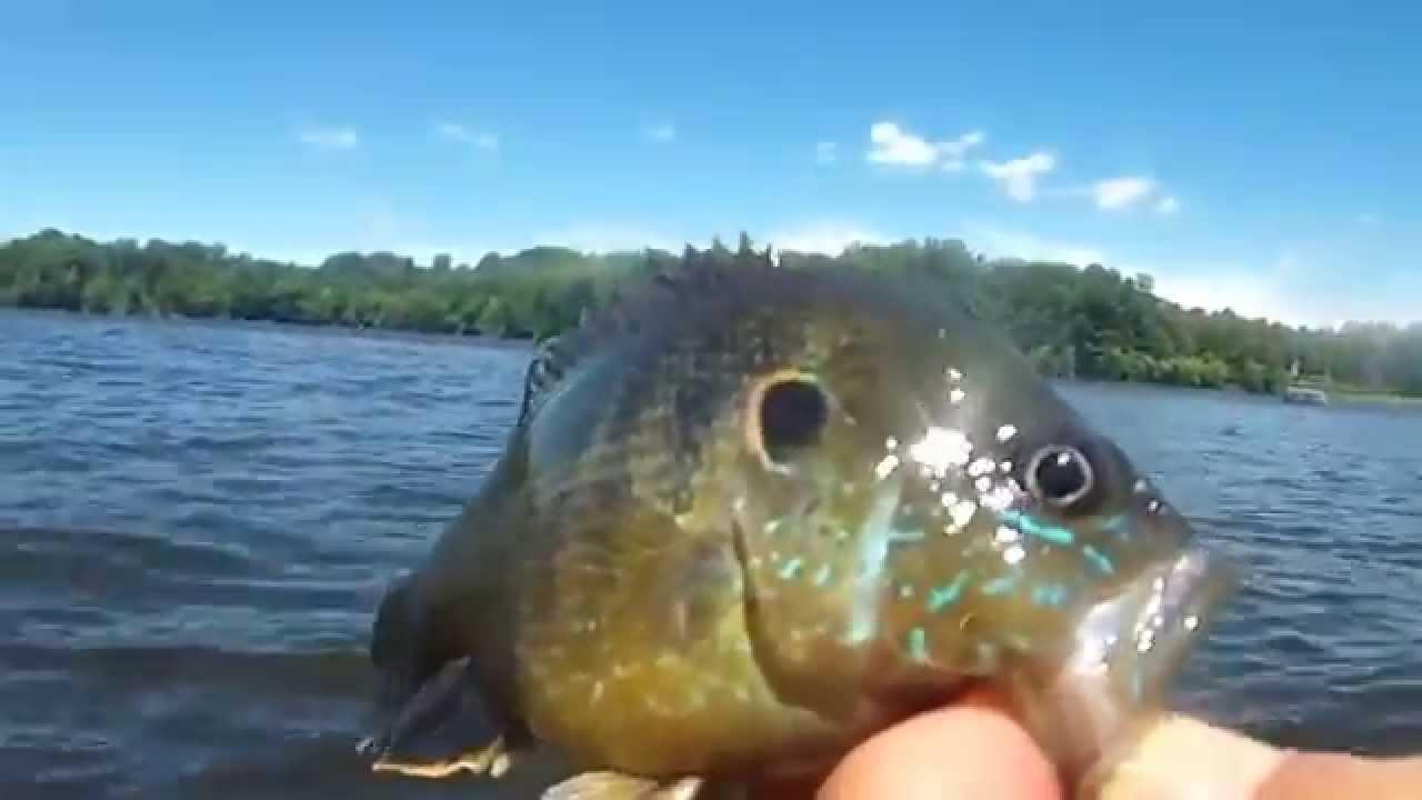Burke lake fairfax va fishing youtube for Virginia lakes fishing