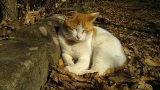 cats thumbnail