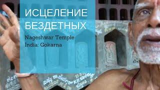 Исцеление бездетных  - Храм Змей - Индия