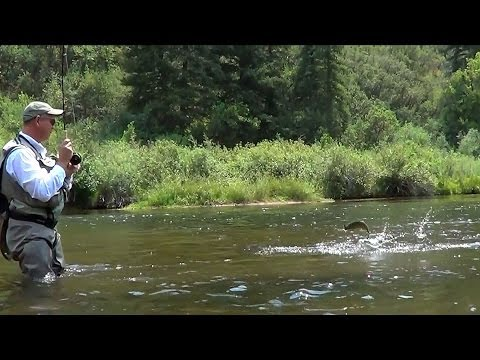Fly Fishing The Roaring Fork & Frying Pan Rivers, Colorado