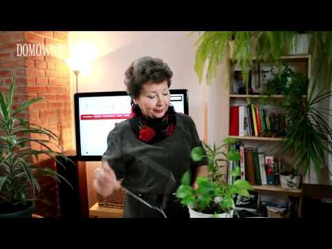 Jak zrobić podpórkę do kwiatów