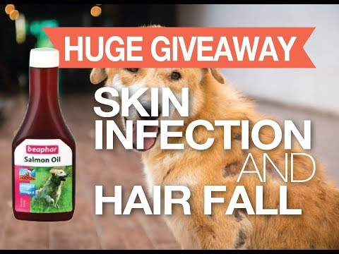 Skin Infection & Hairfall In Dogs & Puppies #FreeGift #Giveaway
